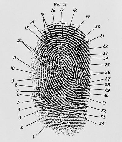 laughman's fingerprint